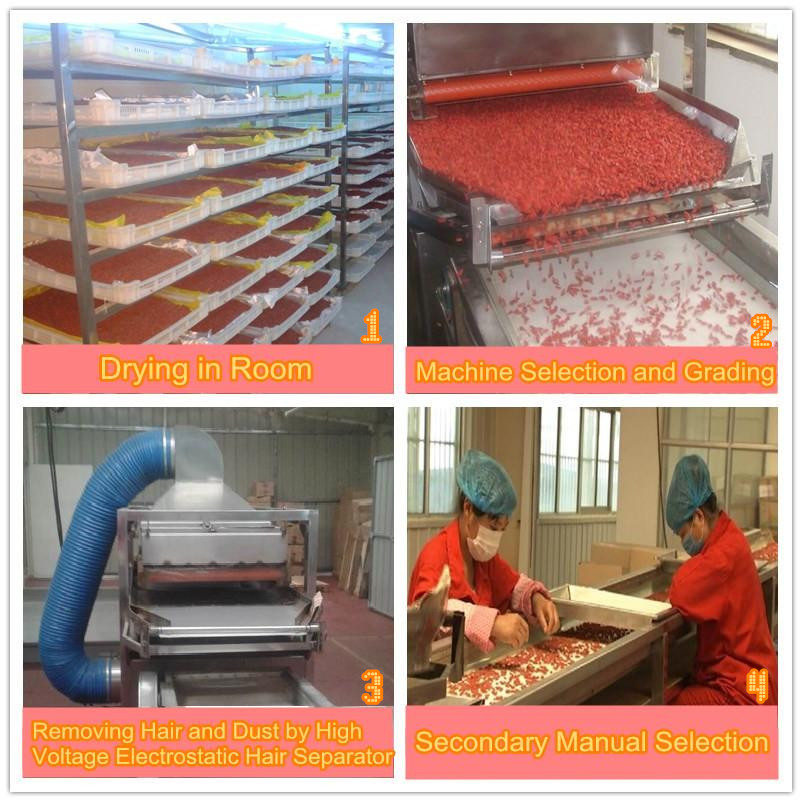 Goji berry drying, grading, selection, removing hair, manual selection