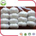 4,5 ~ 6,0 Cm Alho Branco Puro Fresco