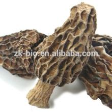 Best selling rich nutrition dried Morchella Mushroom
