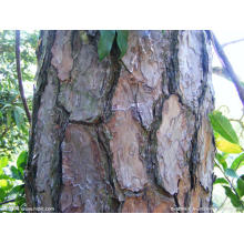 High Quality Pine Bark Plant Extract