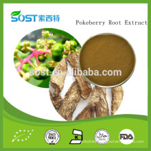 Natural Chinese herb pokeberry root extract / Radix Phytolaccae Extract /Shang lu Extract