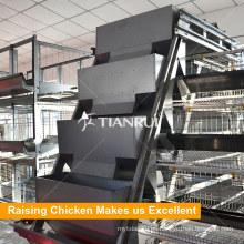 Equipo automático de alimentación de aves de corral en la granja de aves de corral