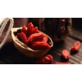 Berry chino orgánico de Goji, Wolfberry chino, medicina china tradicional