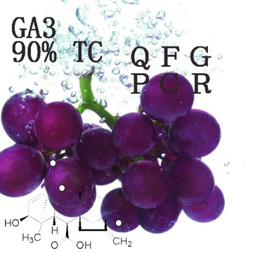 Ga 3 Gibberellic Acid 90% Tc Plant Growth Regulator