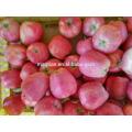 2017 Fresh Red Star Apple