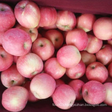 New Crop Carton Packing Fresh FUJI Apple
