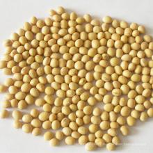 vegetable green bulk  bean soybean seeds  non gmo