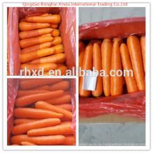 Вид Красной свежей моркови 316/10кг/коробка из Китая