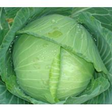 HC04 Shiba résistant à la chaleur, Oblateness vert F1 hybride graines de chou
