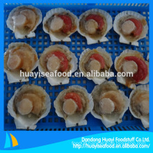 Frozen Seafood Half Shell Scallop Price