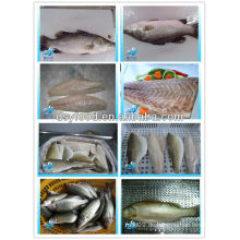 FROZEN SEA BASS FISH / SEA BASS FILET