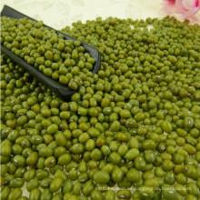 Grano A Verde Mung Bean Con Precio Favorable