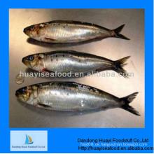 Gefrorene hervorragende überlegene überlegene quailty sardine Lieferant