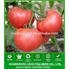 NT491 Tianhe prices tomato seeds china manufactory