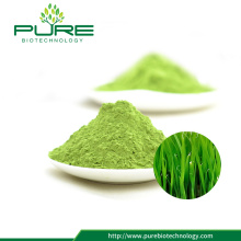 Spray Dried 100% Natural Wheatgrass Powder