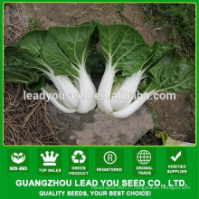 NCC03 Sufe graines de chou chinois en gros, graines pour champ ouvert