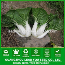 NCC03 Sufe sementes de repolho chinês atacado, sementes para campo aberto