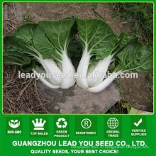 NCC03 всем китайской капусты семена оптом , семена для открытого грунта
