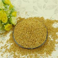 2012 nueva cosecha, elige bien Mijo de maíz de la escoba blanca glutinoso