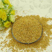 2012 new crop,Well choose Glutinous white broom corn millet