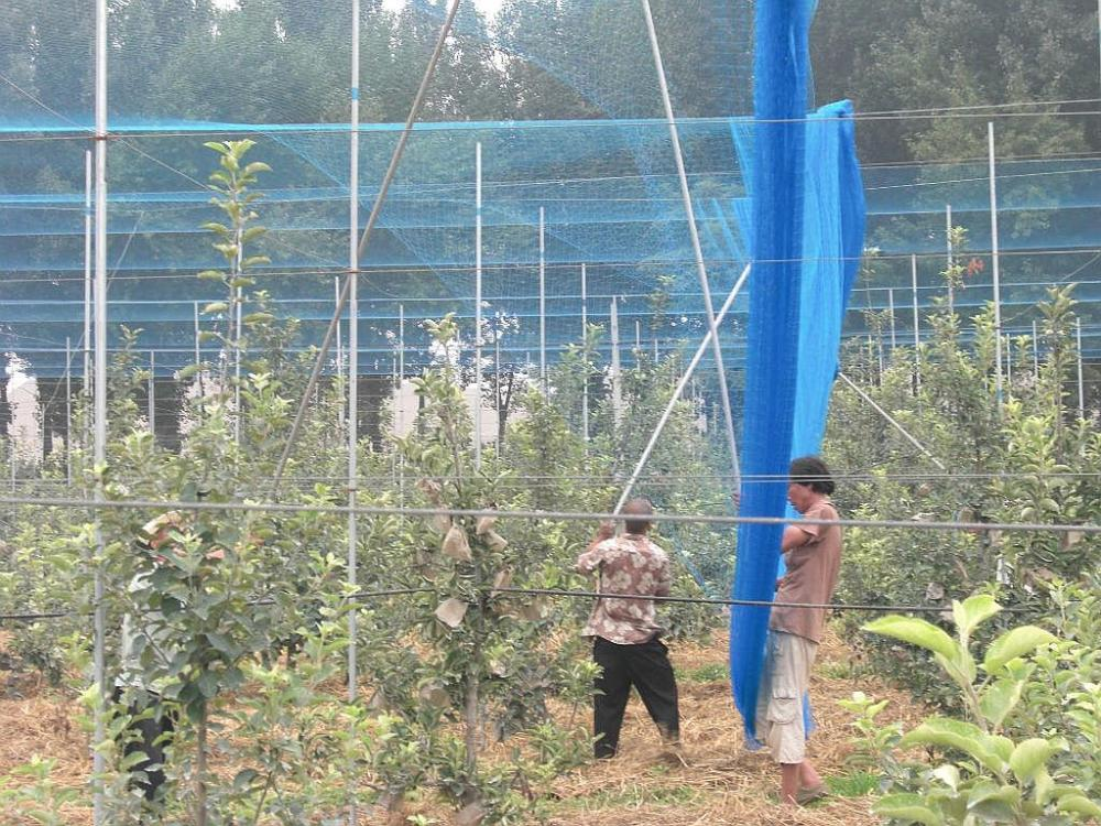 Competitive price hdpe anti bird net manufacturer