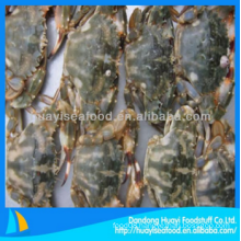 frozen mud crab good supplier and exporter
