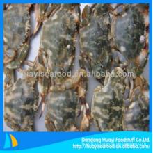 De caranguejo de lama congelada bom fornecedor e exportador