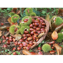 Greenfarm Chestnut Precio bajo