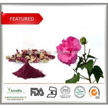 100% reine Natur Anthocyane 5% -25% Hibiskusblüte PE / Hibiscus PE