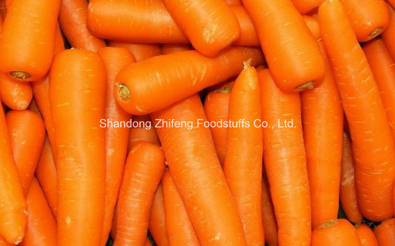 Shandong Yellow and Fresh Carrot