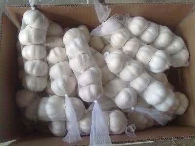 White Garlic with Good Price for Sale