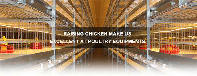 H Frame Broiler Poultry Equipment