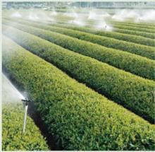 Fulvic Acid Chelated Magnesium Fertilizer for Agriculture