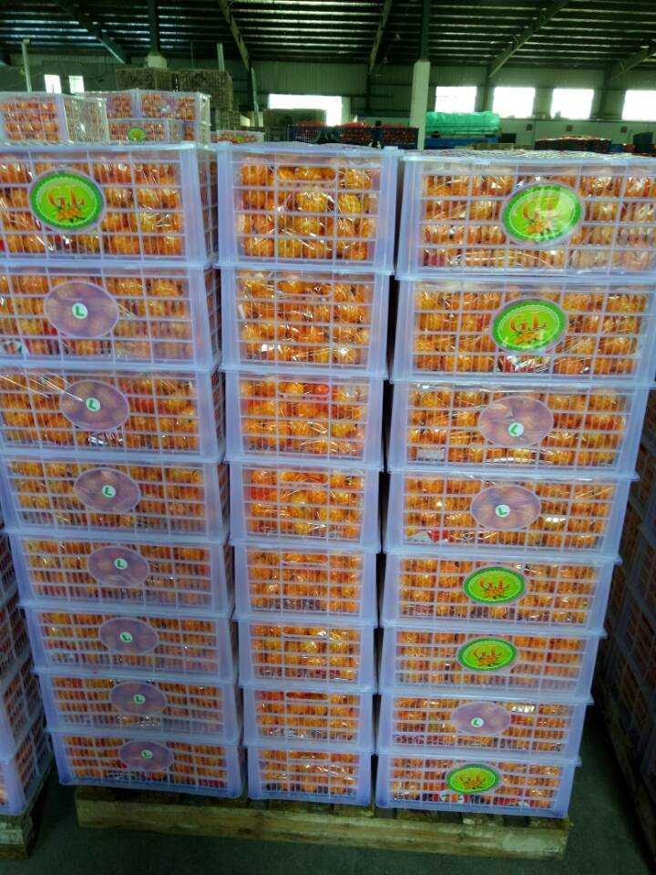 2016 New Crop Nanfeng Small Sweet Baby Mandarin