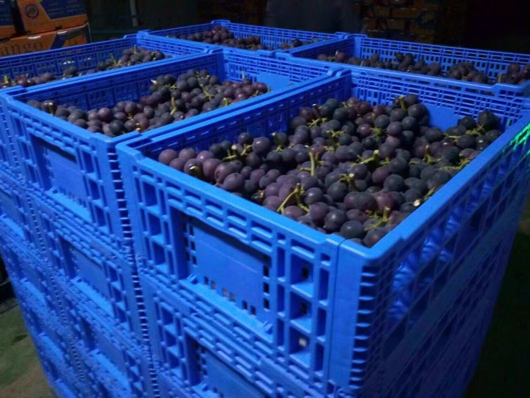 600 X 400mm Collapsible Fruits Storage Distribution Plastic Crates Recycled