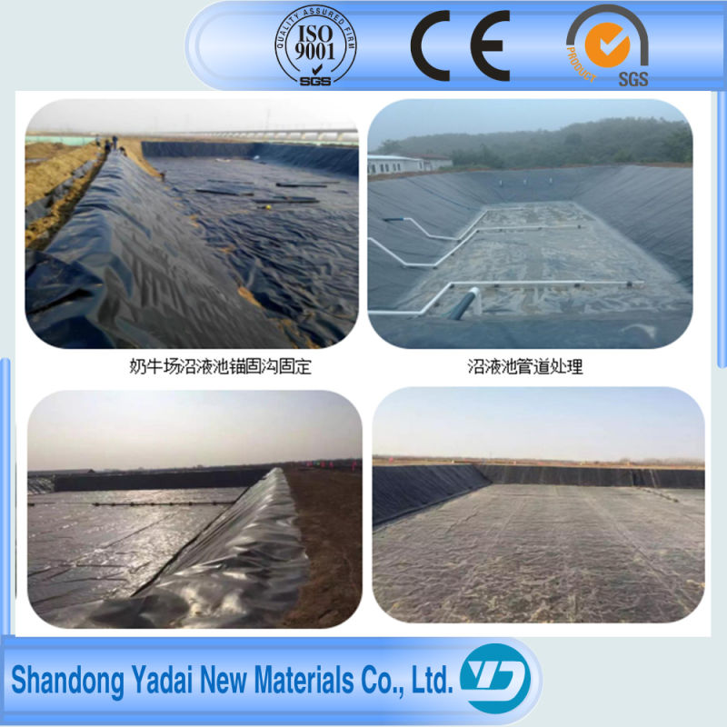 HDPE Geomembrane HDPE Sheets for Waterproofing