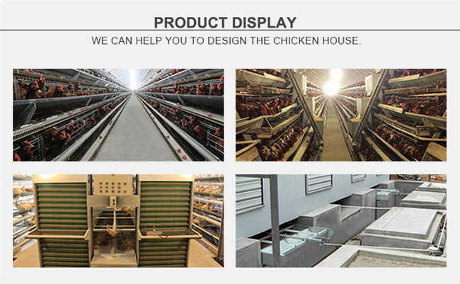 New Design Low Price a Type 4 Tiers Battery Layer Cages