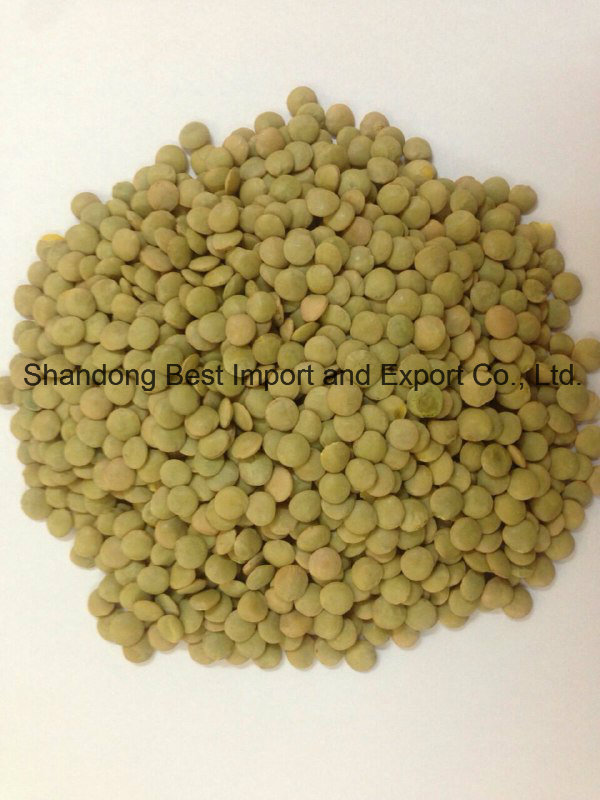 3.5-5mm New Dried Green Lentils
