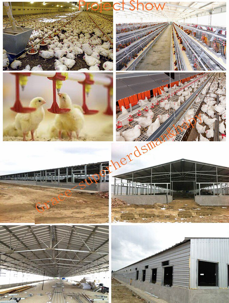 Automatic Chicken Housing Equipment for Broiler