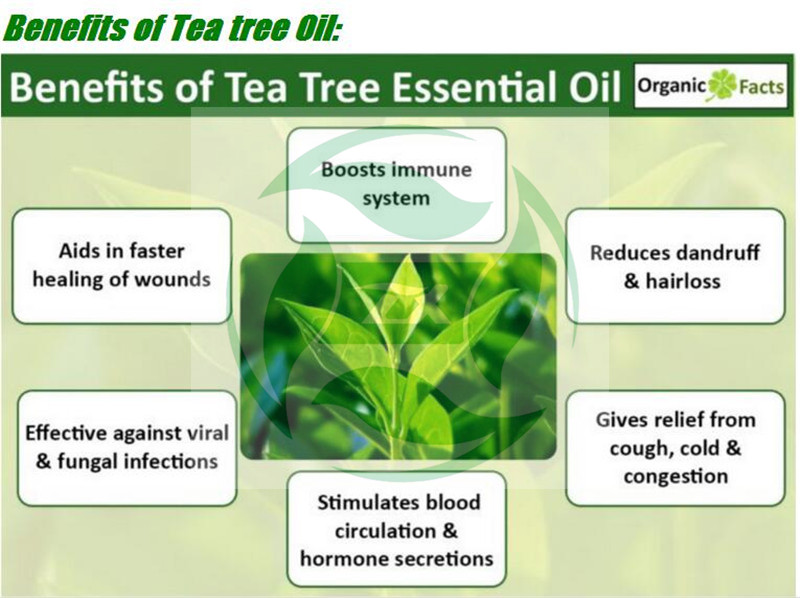 tea tree essential oils