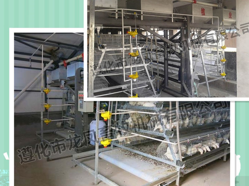 Full Automatic Manure Remove System
