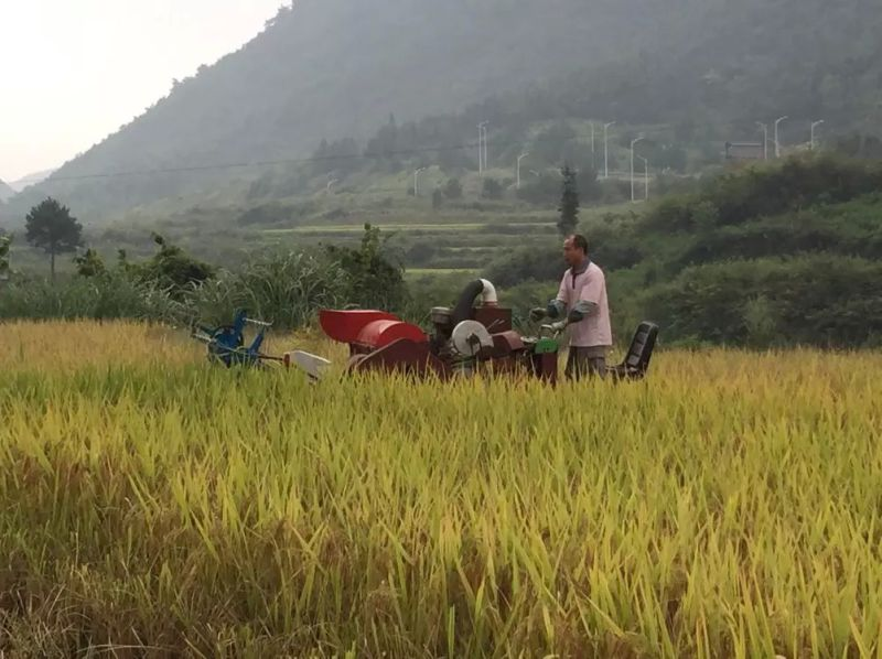 Rubber Crawler Mini Rice Harvester for Sale India