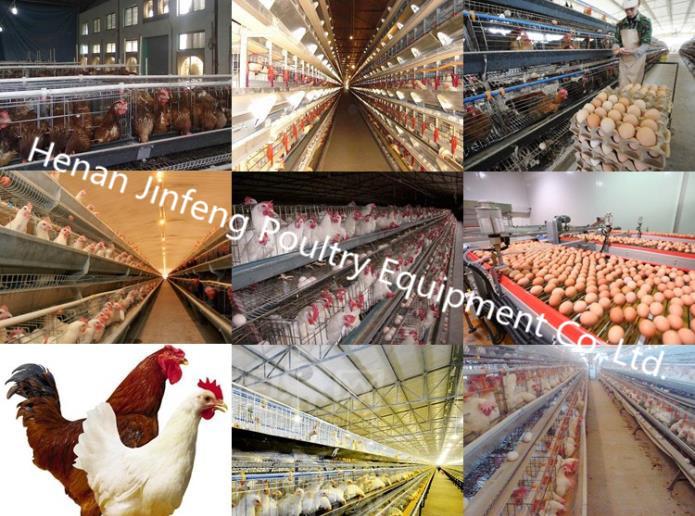 Cheap Hot/Cold Galvanization Cage Chicken