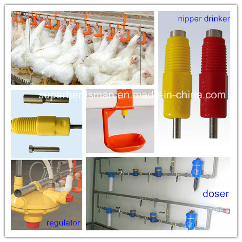 2016 Hot Sale Chicken Farm Equipments with Steel Structure Poultry Shed
