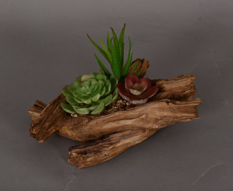 Bonsai Potted Succulent in Evergreen Plant with Different Pot Sizes (18-HF3911)