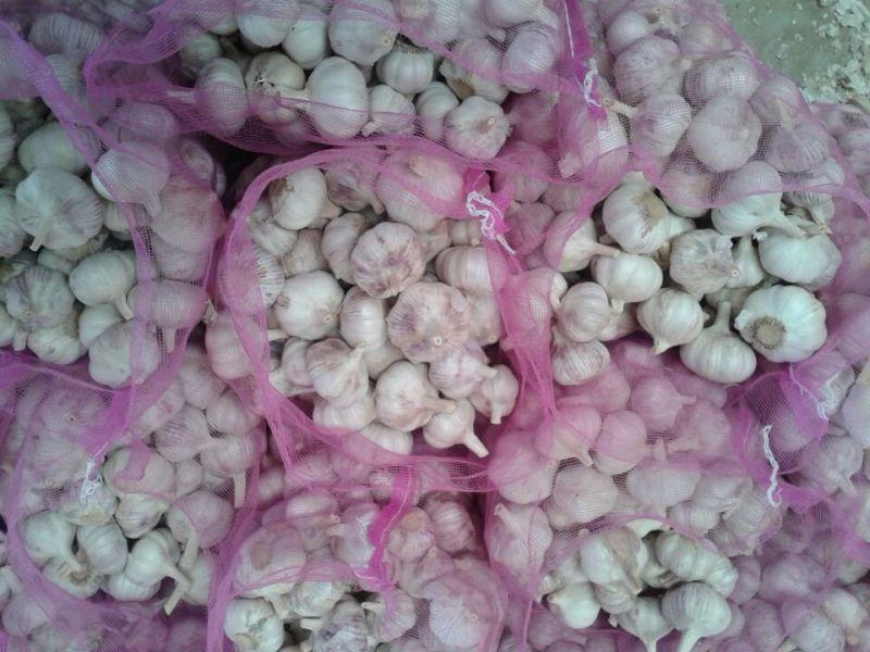 2014 New Crop Normal White Garlic