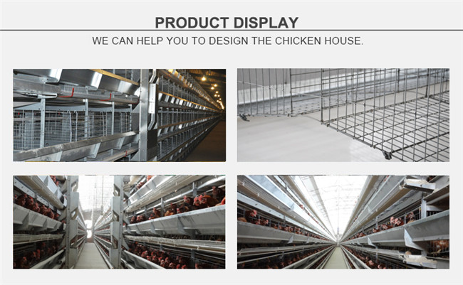 Tianrui Best Design Durable Automatic H Type Battery Layer Chicken Cage