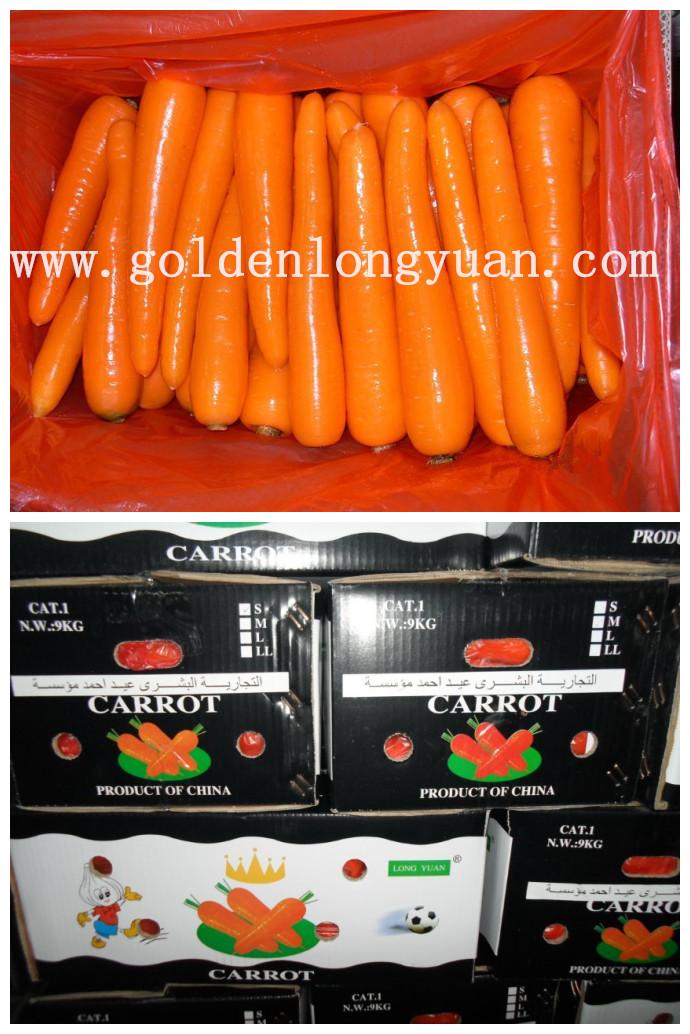 New Harvest Good Quality of Fresh Carrot (80-150g)