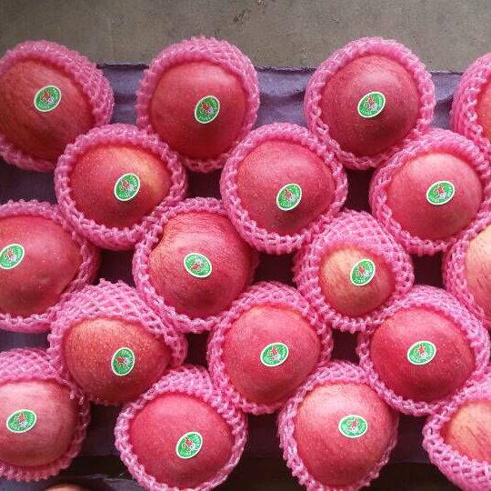 Regular Supplier of Fresh Red Qinguan Apple