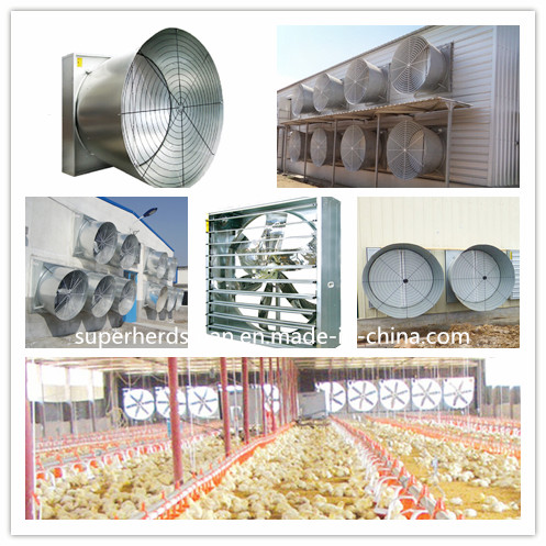 Full Set Automatic Poultry Equipments for Broiler Chicken
